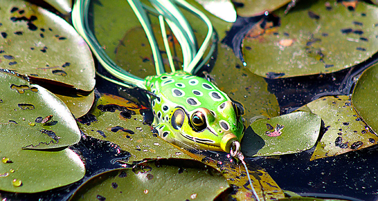 hollow bodied frog largemouth lure