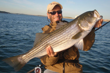 While nearby anglers had little to show for their efforts, the author took three stripers while snapping wire aboard the Valkyrie.