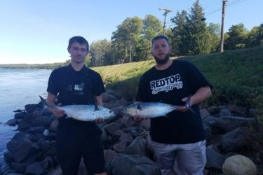 The young guns at Red Top Sporting Goods have been sneaking away from the shop to catch false albacore in the Cape Cod Canal.