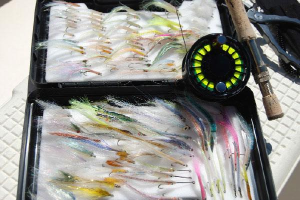 Fly anglers should stock up on small baitfish patterns that imitate the abundant rainbait.