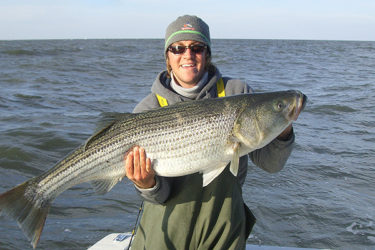 Chunking for Delaware Bay stripers gets started in October and lasts well into November.