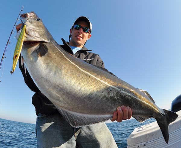 Pollock feed heavily on baitfish like herring and mackerel, so they will readily strike jigs.