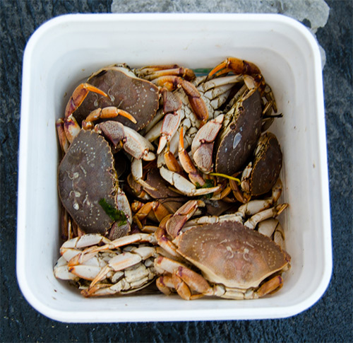 Fishermen targeting trophy tog often use white-legger crabs