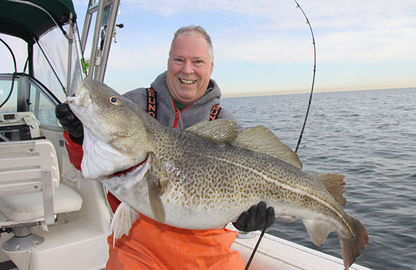 While blackfishing with Taylor within sight of Jones Inlet, the author used a whole, palm-sized white crab to tempt this 30-pound cod in just 65 feet of water.