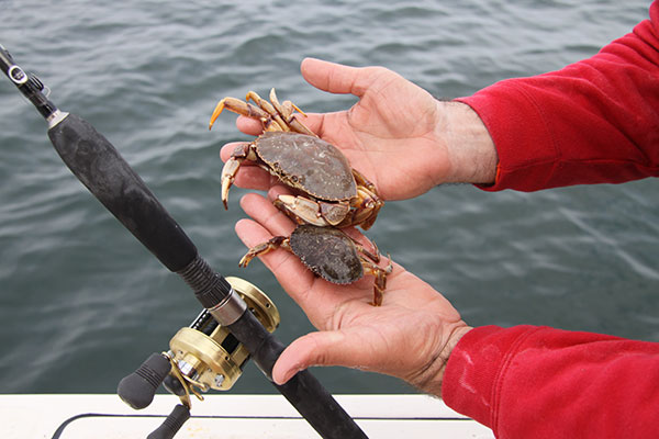 Bill Taylor favors large baits, like these big white crabs