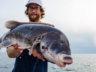 Newport Sport Fishing Charters Tautog