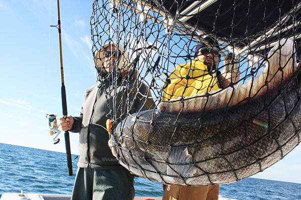 More captains are opting for jigs instead of traditional bottom rigs.
