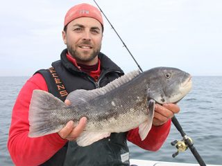 Release the big tautog and take home the three- and four-pounders for dinner.
