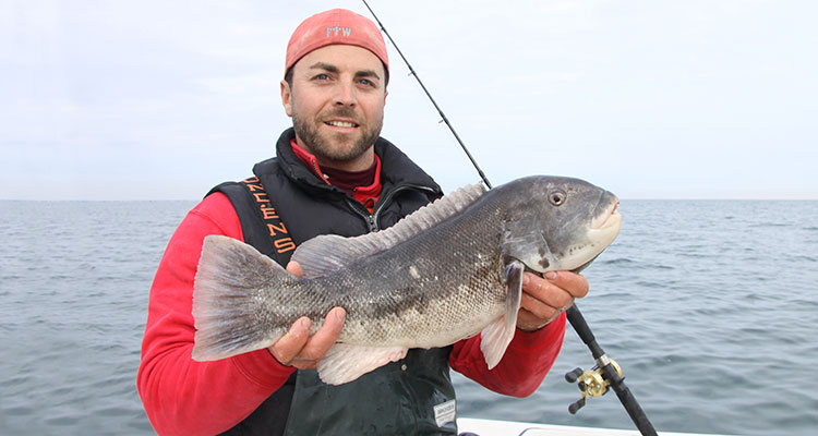 When fishing the right spot for tautog it feels like something special is about to happen. If you fish it right, you will be rewarded with big fish.