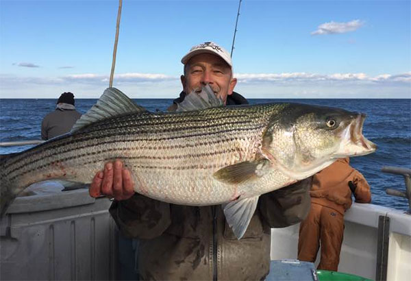 The bigger rips hold more stripers as they offer a better hunting scenario for striped bass.