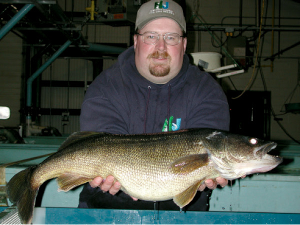 Hatchery Superintendent Craig Lemon with a broodstock walleye.