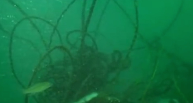 Tangles of ropes and commerical gear can snag fishing lines and anchors.