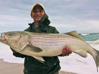 Though the November surf is dominated by abundant smaller bass, when big bait moves in, big stripers are often hot on their tails.
