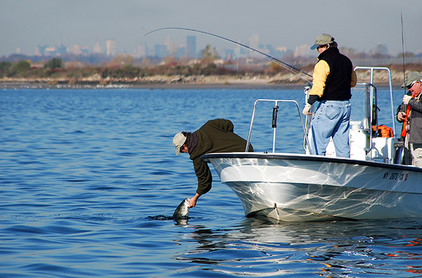 The shallow flats of Jamaica Bay are invaded by stripers and large bluefish alike, providing excellent fly-fishing and light-tackle opportunities.