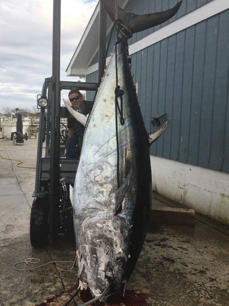 Photos 1045 pound bluefin tuna caught in north carolina for Tuna fishing north carolina