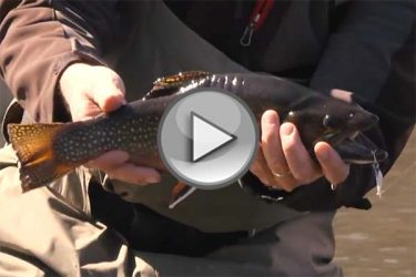 Cape Cod Kettle Pond Trout