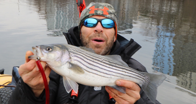 Unusually warm water temperatures have holdover stripers stirring!