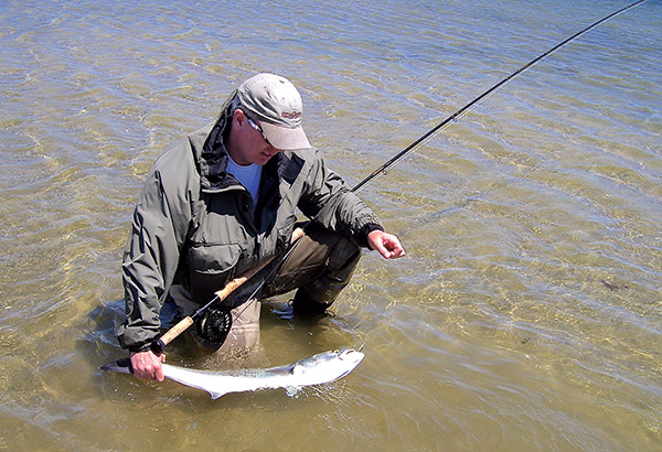 If a school of bluefish suddenly appears, you can change casting direction very easily with a Spey cast.