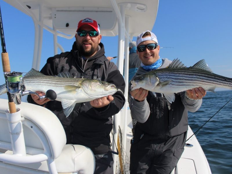 Leaving fish to find fish buzzards bay and cape cod bay for Cape cod fishing report