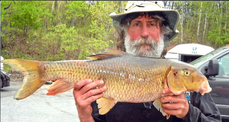 Two fish certified as new vermont state records on the water for Vermont state fish