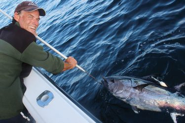 Capt. Josh Zacharias revives a large school-size bluefin prior to release during a memorable August day on which six tags were deployed.