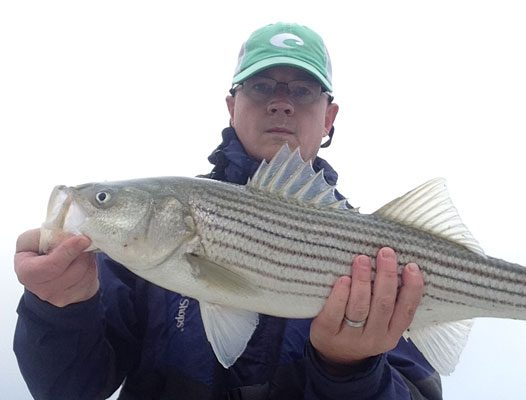 Mike Winn with a Cape Cod Bay bass