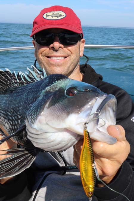 This nice sea bass hit a Sebile Vibrato in Buzzards Bay!