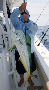 Southern Tactics For Northern Mahi On The Water