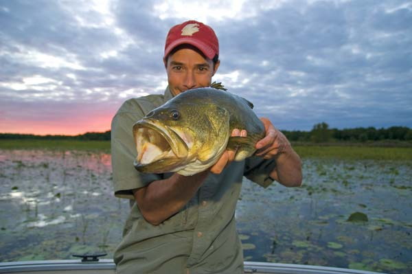 The author with proof that topwater frogs are irresistible to largemouth in low light.