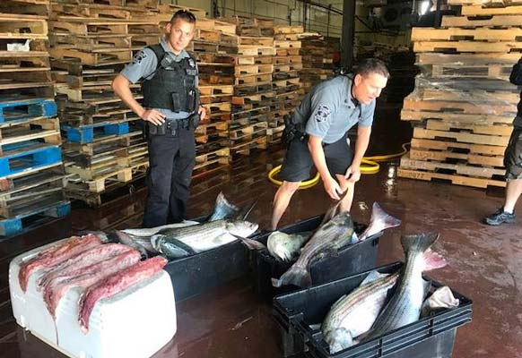 Cape Cod Canal poachers busted