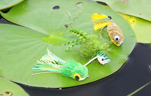 Fly fishing for fall largemouths on the water for Fishing poppers for bass