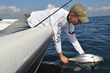 The arrival of false albacore in late summer is reason for light-tackle anglers to get excited.