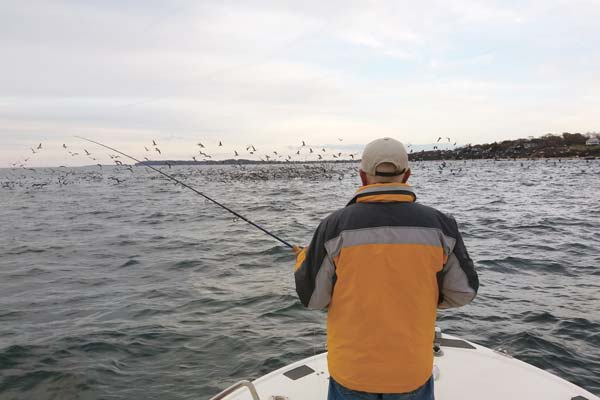 Stay at the right speed for finicky striped bass feeding on bay anchovies.