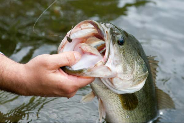 Jigs worked slowly for cold water largemouth bass