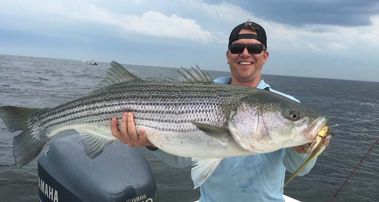 Fourty-pound stripers on the fly