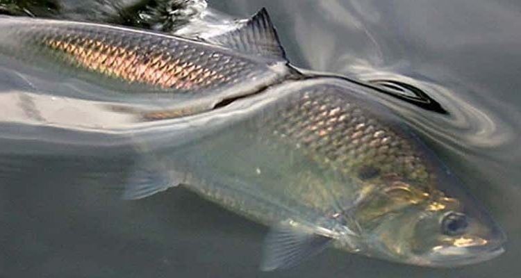 Rhode Island Fish And Wildlife