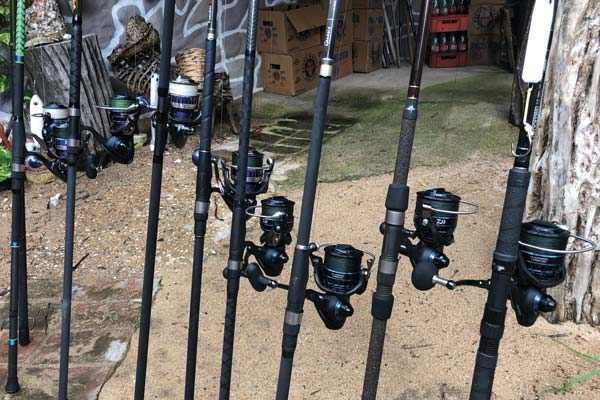 Use reels with strong drags for roosters and jacks.