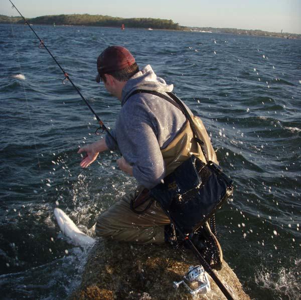 back water December striped bass
