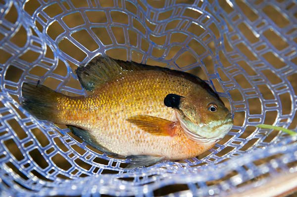 Look to structure for fall fish