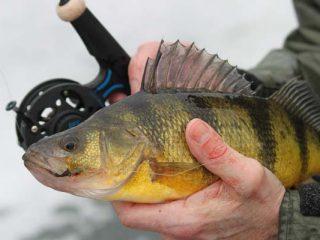 NH Free Fishing Day