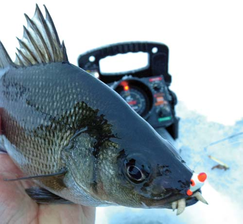 Ice jig tipped with a piece of worm