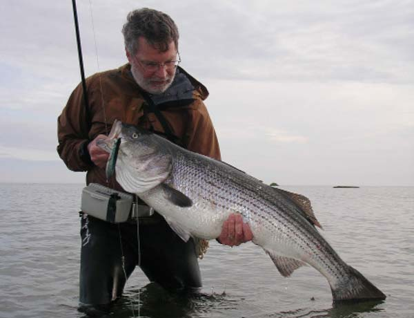 big plugs fished in the presence of adult bunker can produce large bass in the daytime.