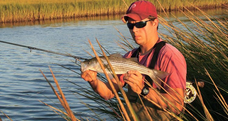 Rediscovering Schoolies…With A Fly Rod