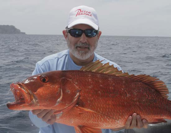 Snapper will rocket to the surface to smash a bait.