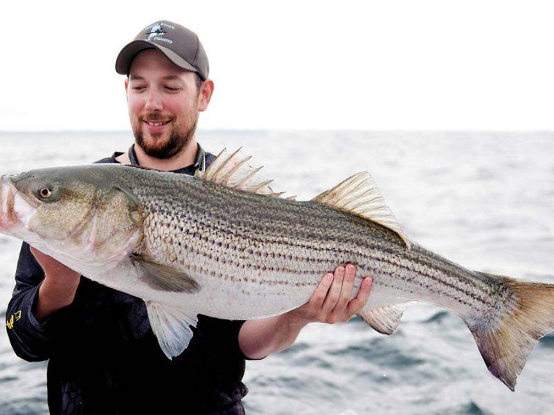 The striper migration when will the bass return on the for Striper fishing ri