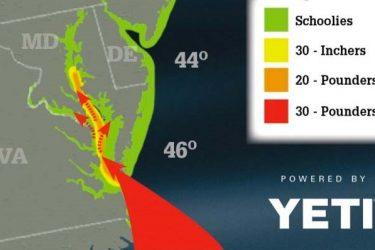 Maine Striper Migration Maps 2018 Related Keywords