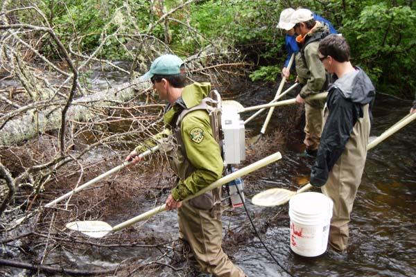 Researchers sample a creek using electrofishing gear