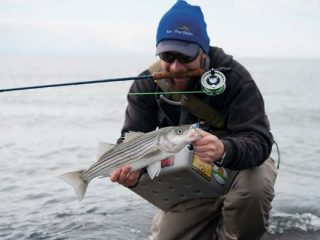 Small stripers arrive in New England estuaries