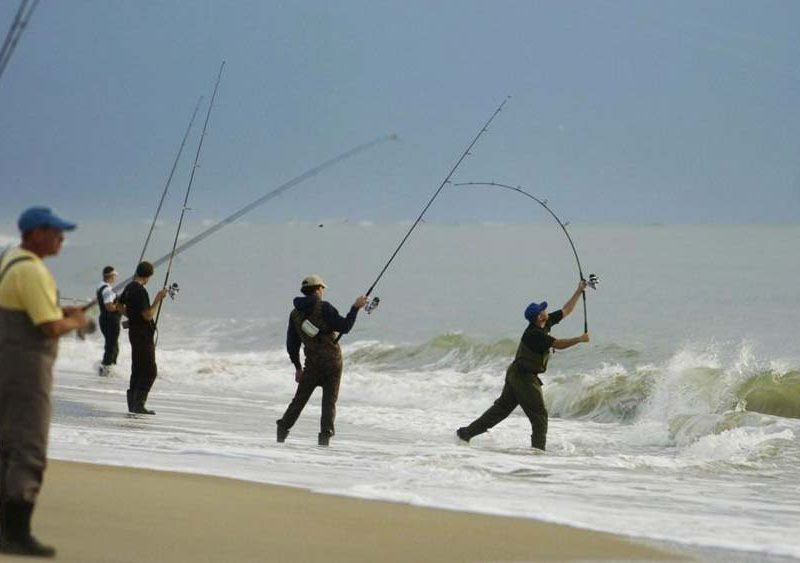 Winners of governor 39 s surf fishing tournament announced for Ibsp fishing report