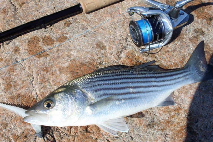 Rhode island fishing report may 3 2018 on the water for Striper fishing ri